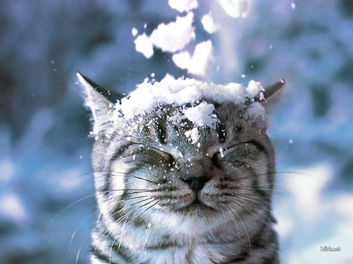 Oh, the snow!